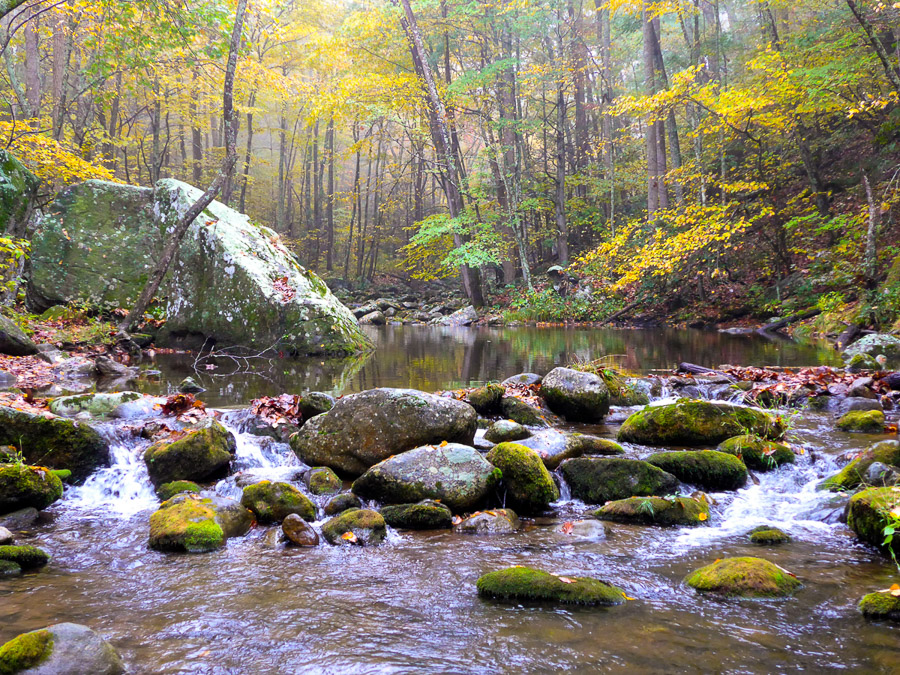 a Virginia trout stream in the fall