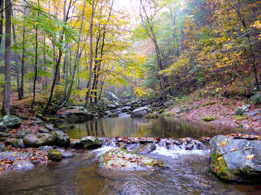 trout stream in the Virginia piedmont.