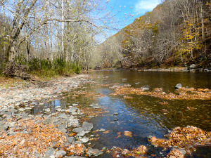 autumn on a trout stream
