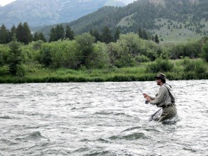 Fly fishing Ennis, Montana