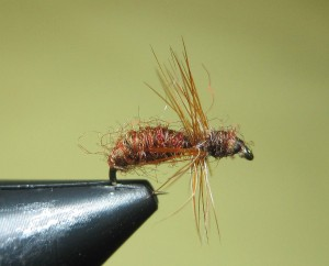 terrestrial fly pattern