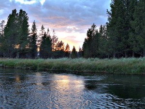 fly fishing the Madison River, Montana
