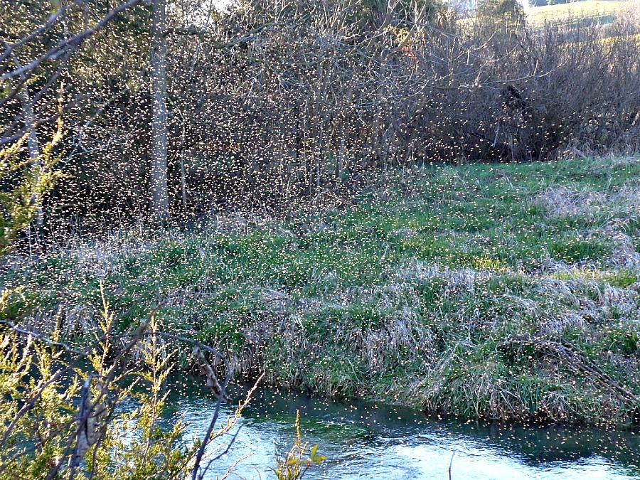fly fishing midges in winter