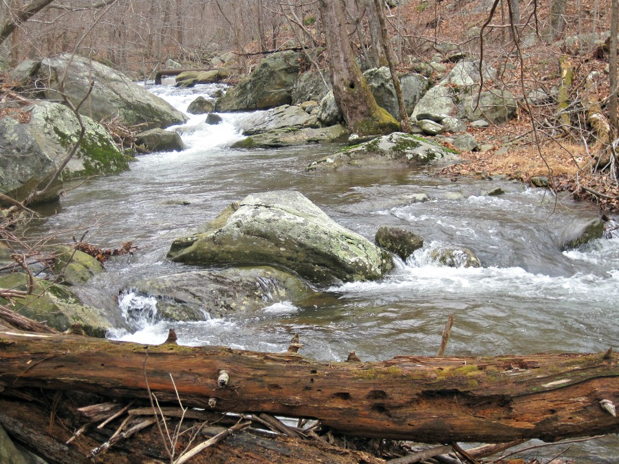 mountain trout stream, Va