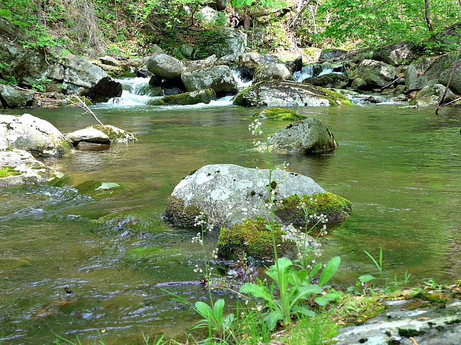 Blueridge trout streams