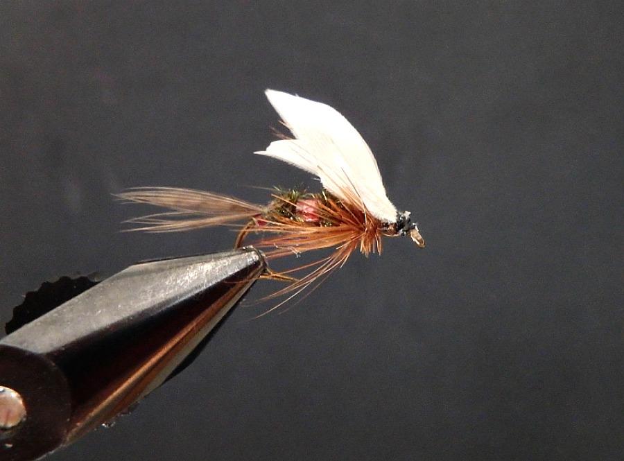 coachman fly