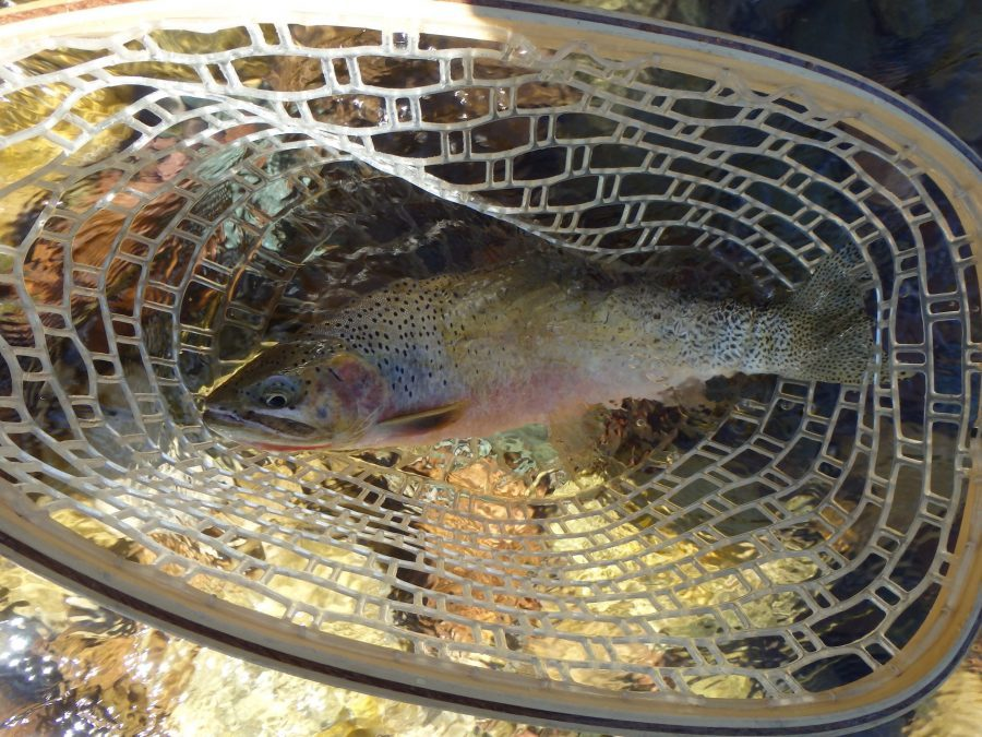 fly fishing the bob marshall wilderness