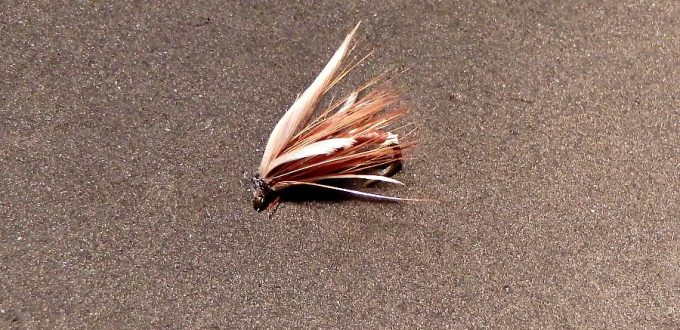 the old-fashioned winged wet fly