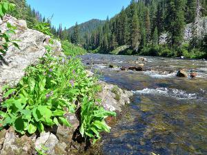 Idaho trout stream