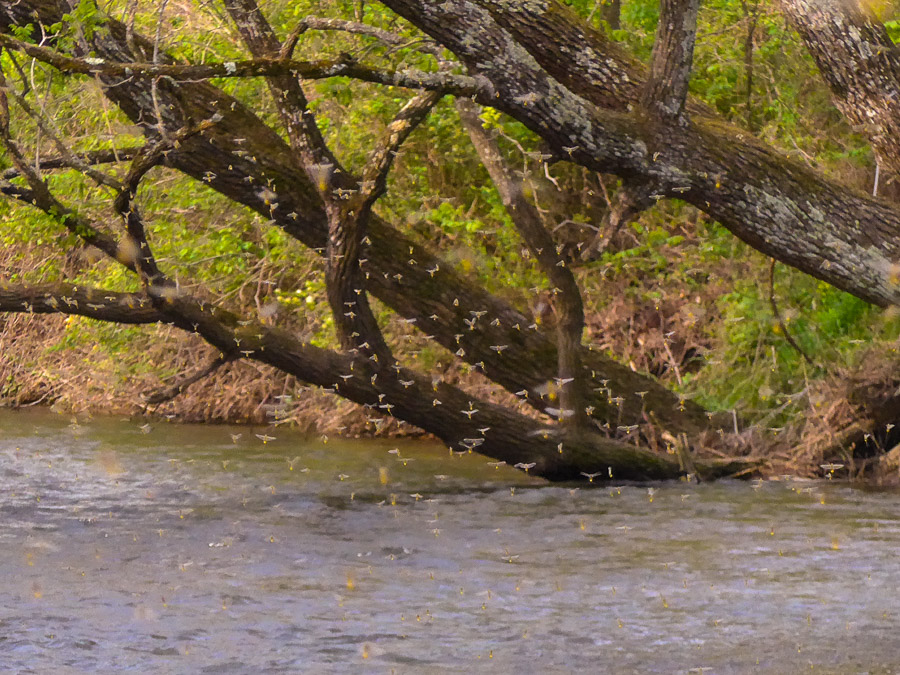 How to Increase Your Catch-Rate of Trout!