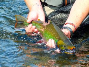 fly fishing Kamchatka