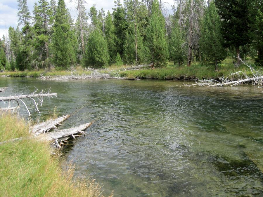 a foamline on the Firehole River