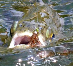 tips to catch more trout