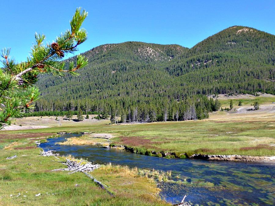 Fly Fishing Spring Creeks