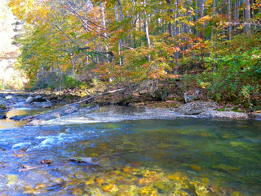 Read Trout Streams Like an Expert, Even if You're Not