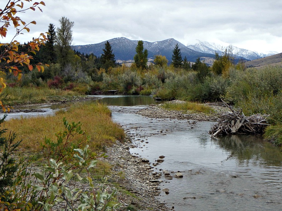Fly Fishing Season Transitions- Strategies for Trout