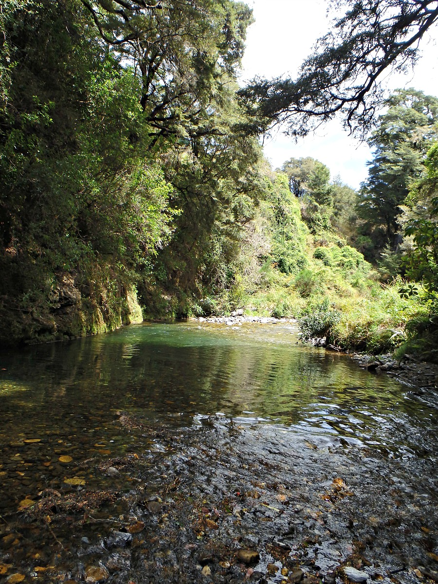 nelson nz, fly fishing for brown trout