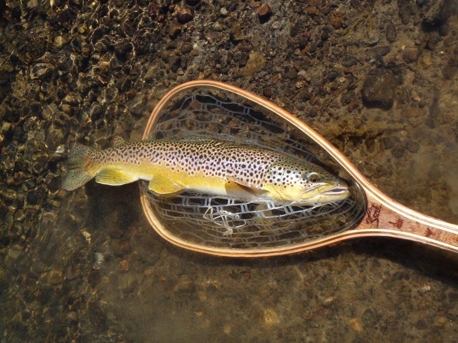 fly fishing Montana's fall shoulder