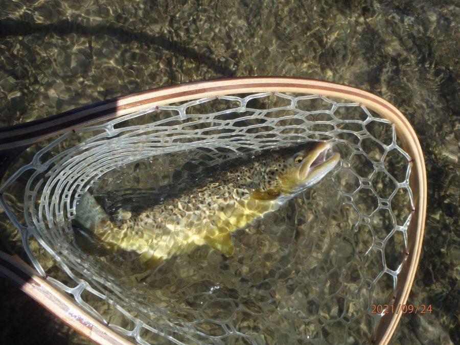 fly fishing western wyoming